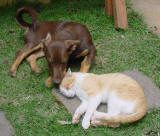mini the dog playing with ginger the cat